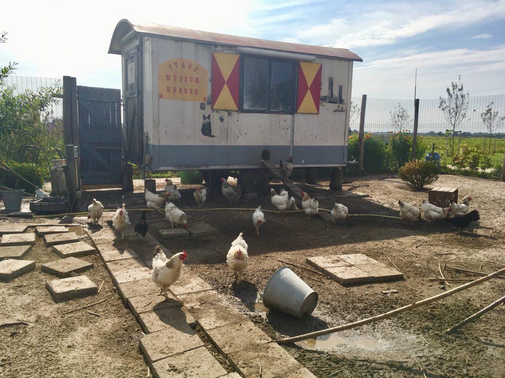 Belevenisboerderij Schieveen kippenren